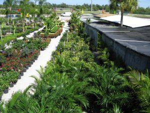 Trees Coral Springs