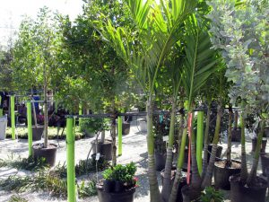Garden Supplies Coral Springs