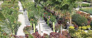 Plant Nursery Pompano Beach
